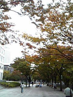 秋の色ですなあ