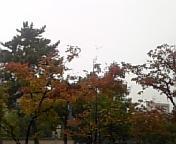 色づいてきた奈良