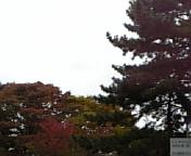 色付きの奈良