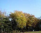 中央公園にて