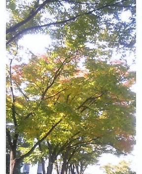 ようやく秋らしさが