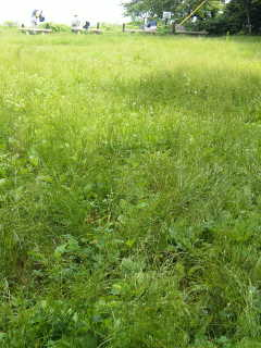 草原にねころんで