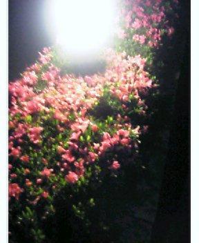 深夜出迎えの花